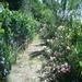 Il giardino con olivi, fiori ed alberi da frutto separa gli appartamenti dalla piscina.